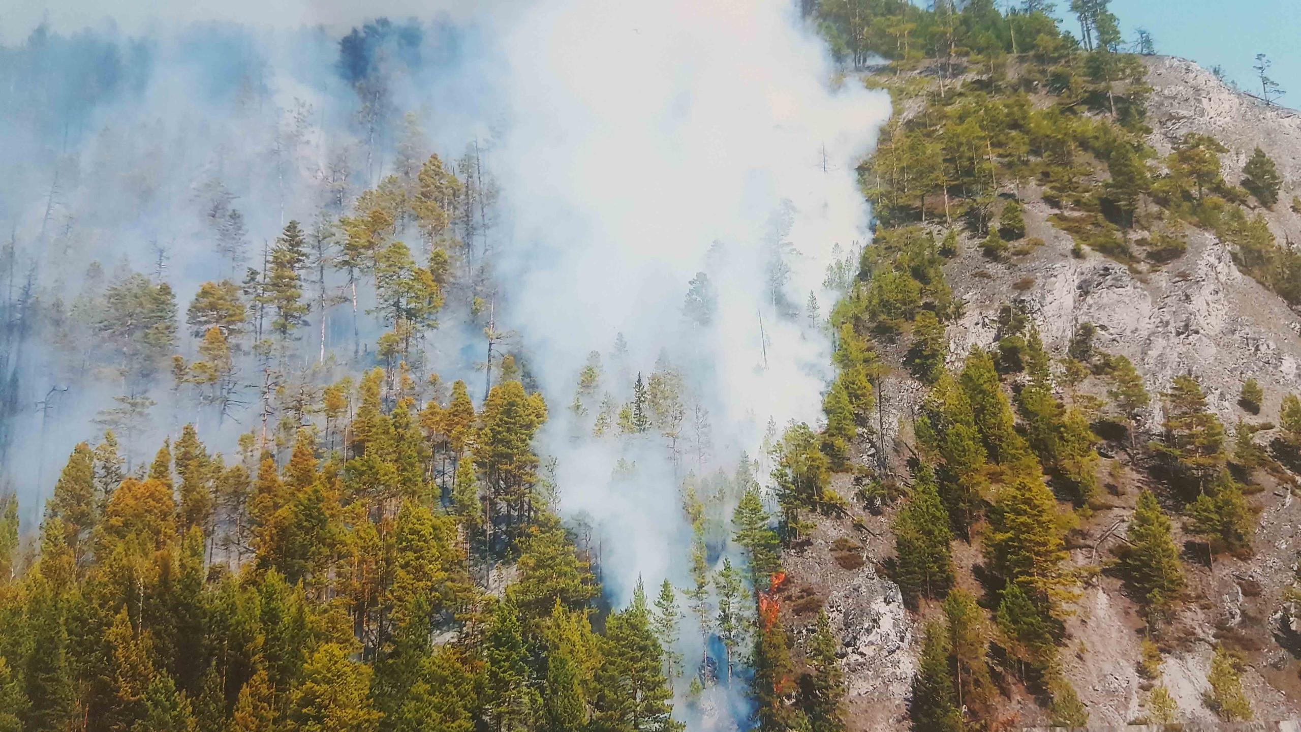 Чупрова Юнона 7 лет Лесной пожар