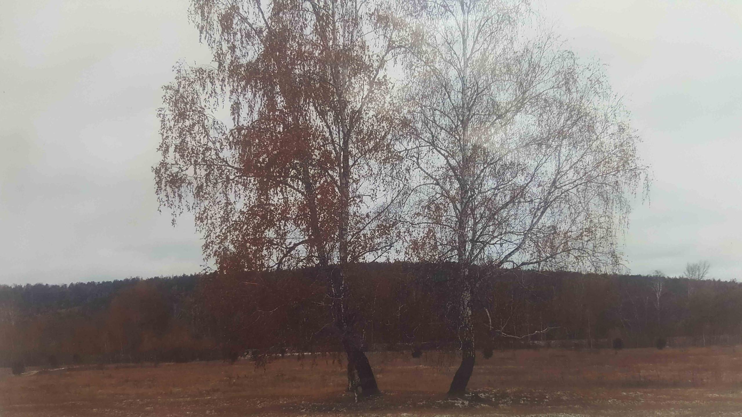 Непутаева Варвара 7 лет Царственные красавицы