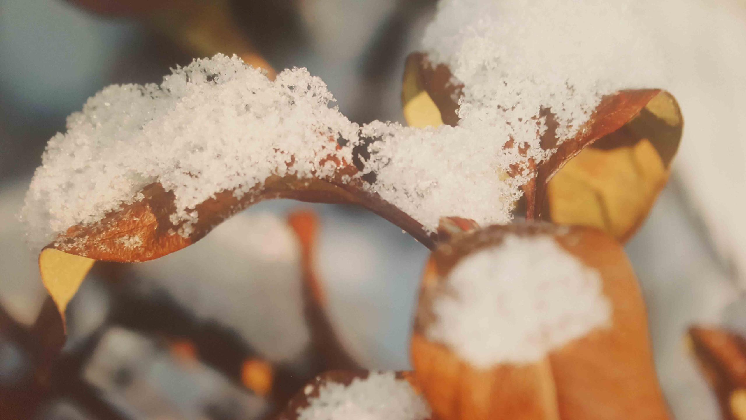 Непомнящих Матвей 4 года Первый снег