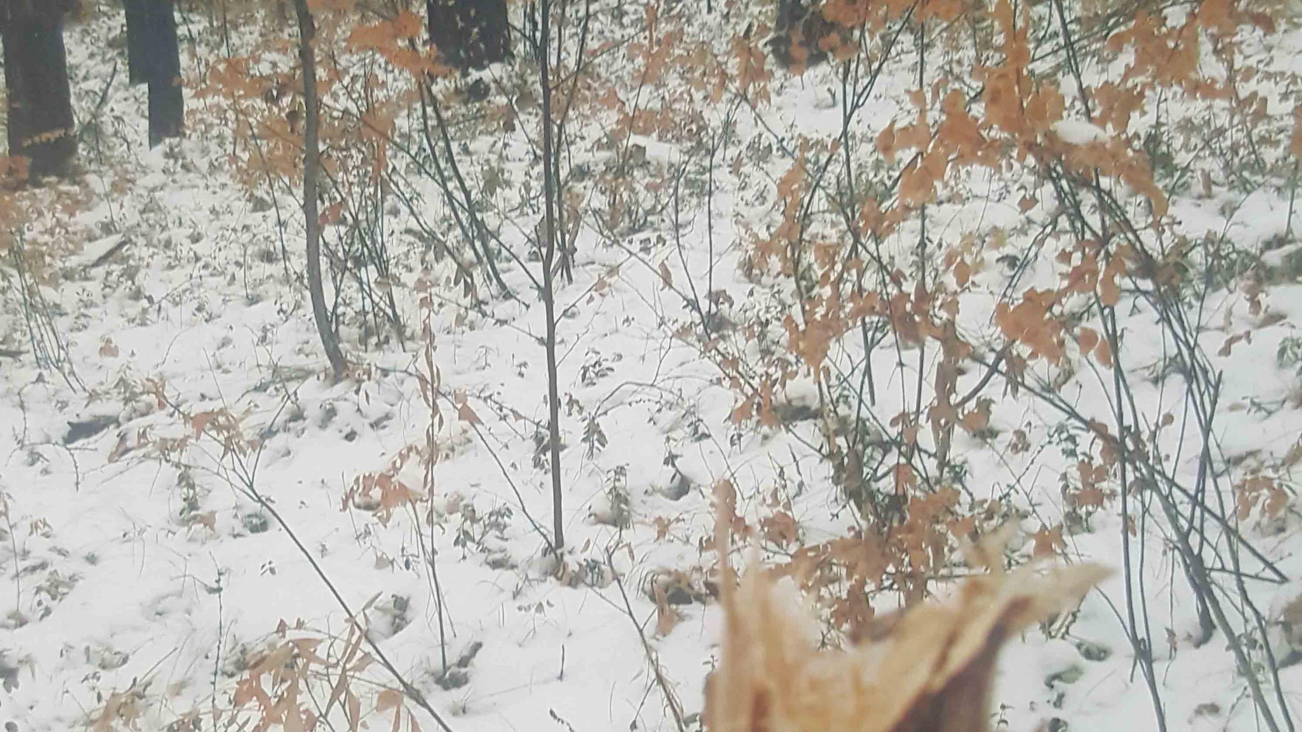 Мартынова Софья 7 лет Вырубка леса