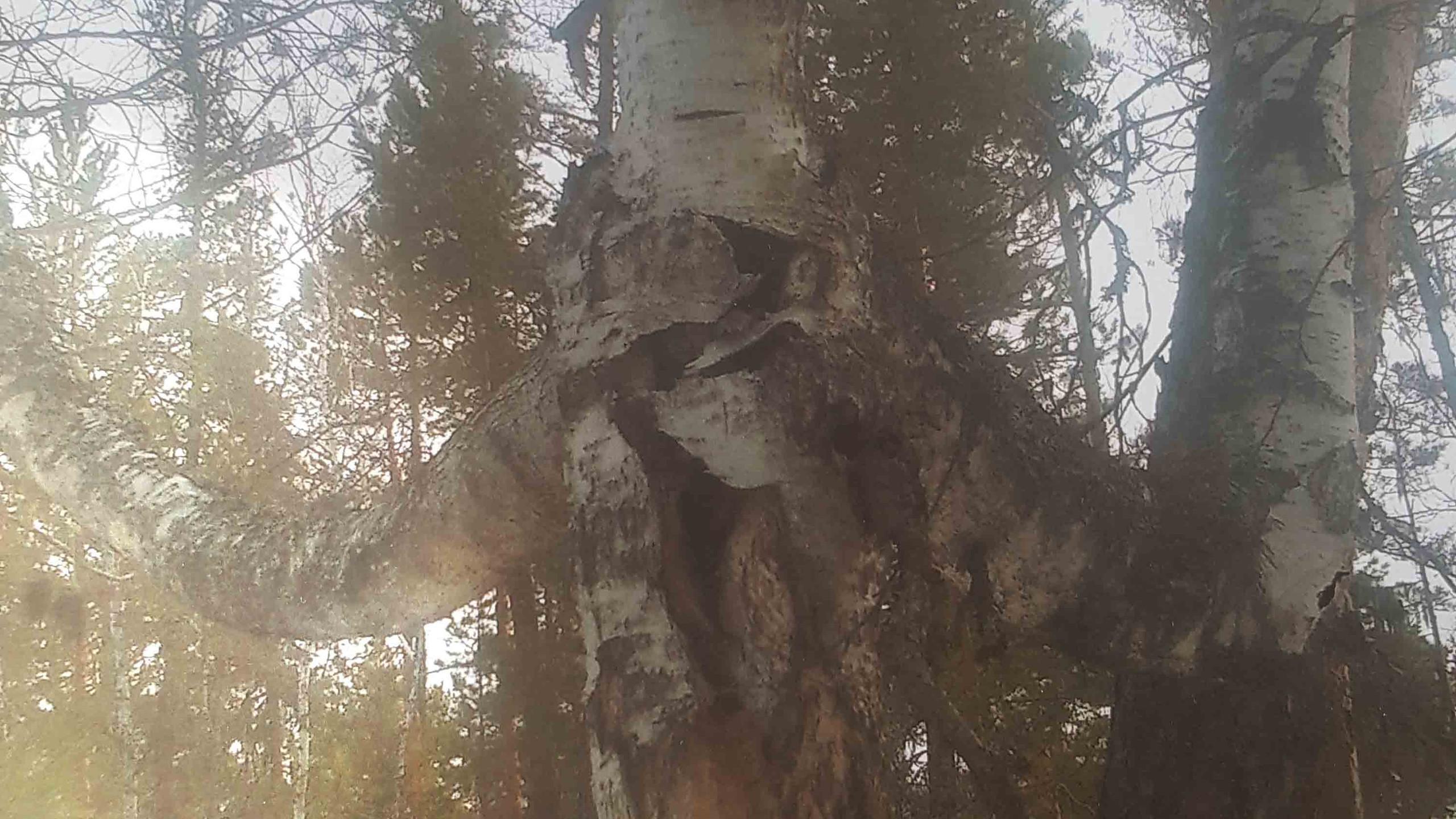 Реодько Тимур 7 лет Деревья необычной формы
