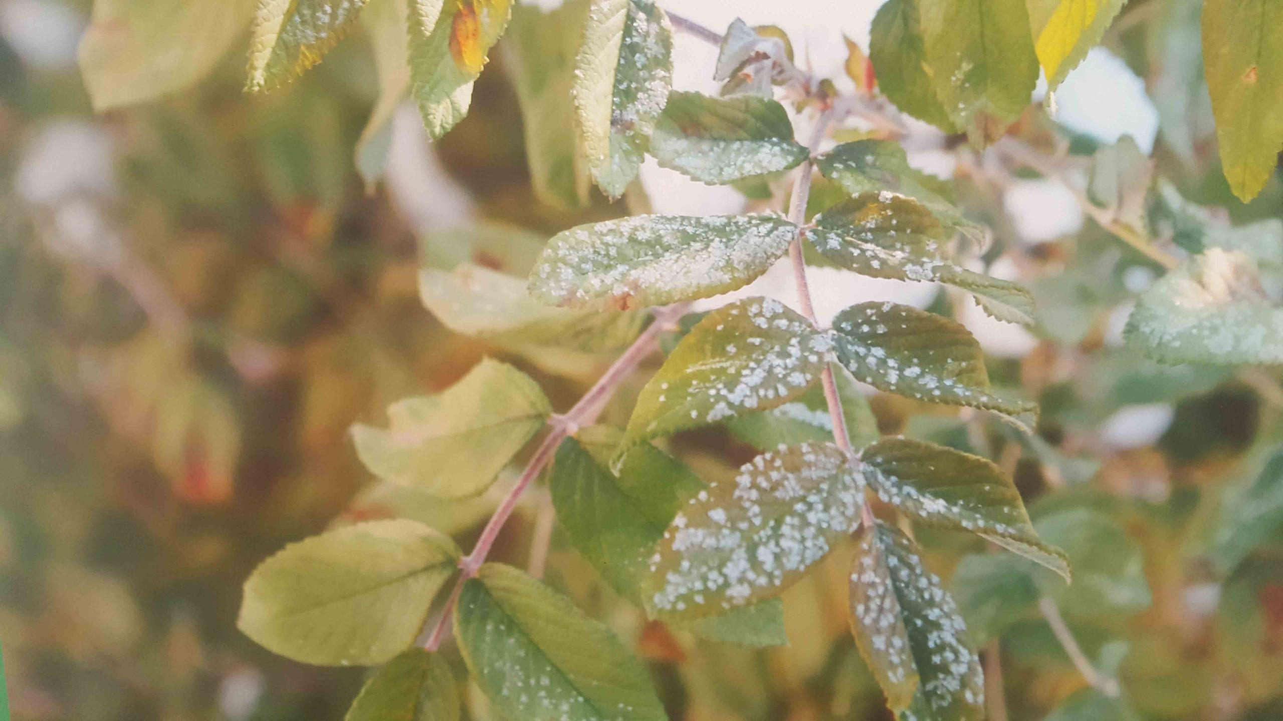Непомнящих Матвей 4 года Морозные листья