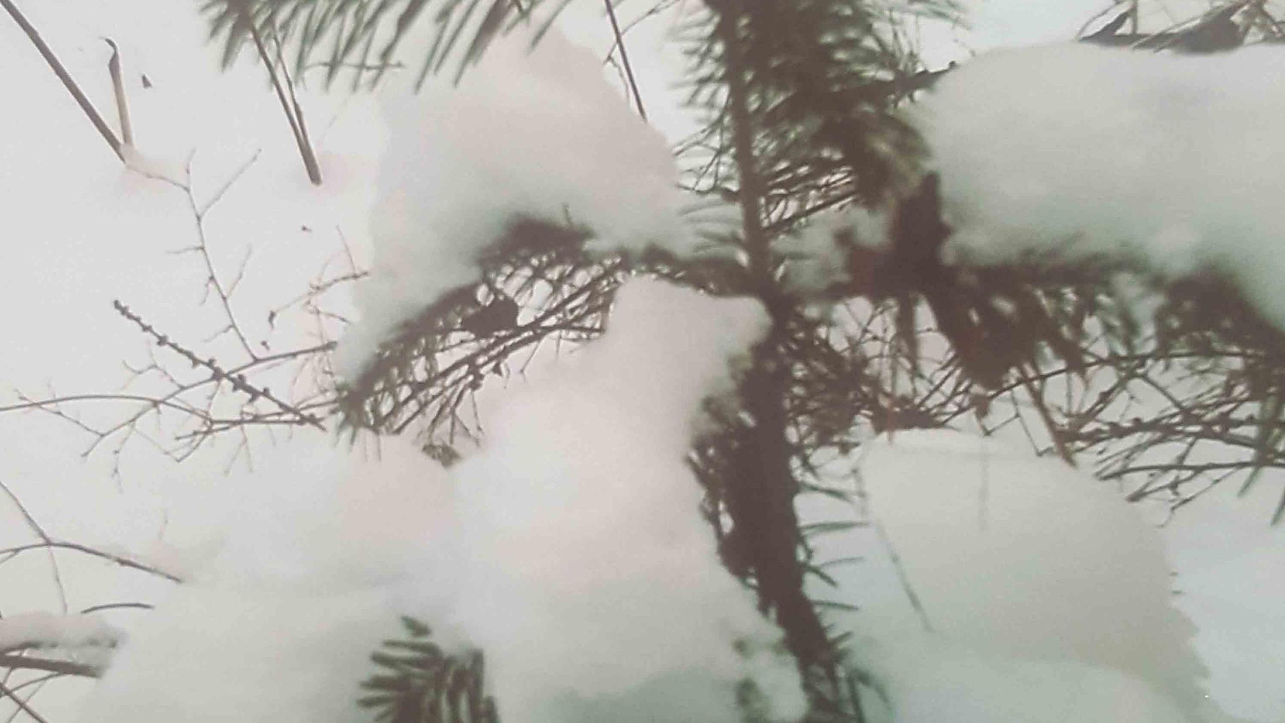 Трусова Алина 12 лет Под снегом пушистым тепло и уютно