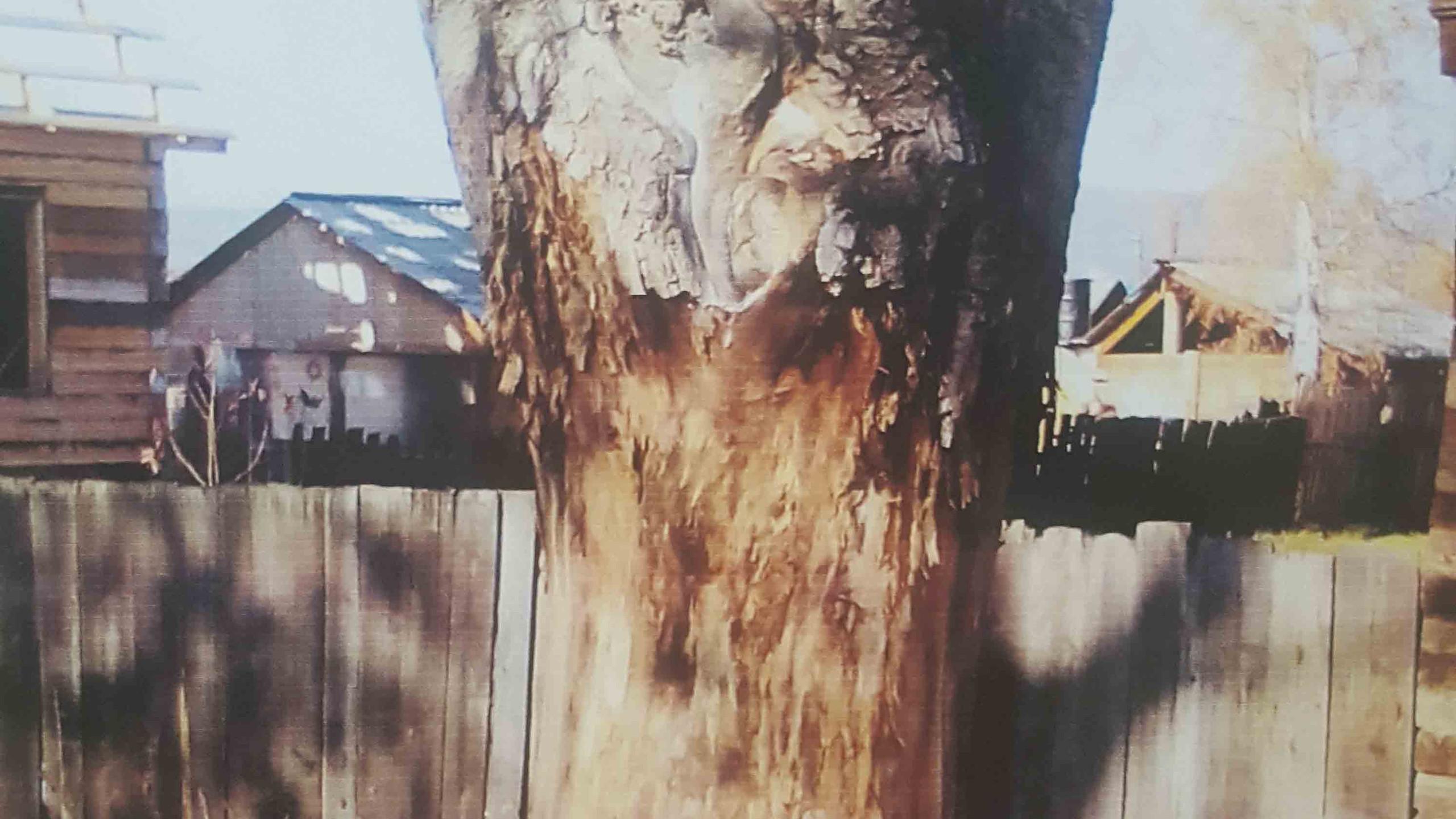 Ганеев Егор 9 лет Здесь недавно деревья шумели листвой