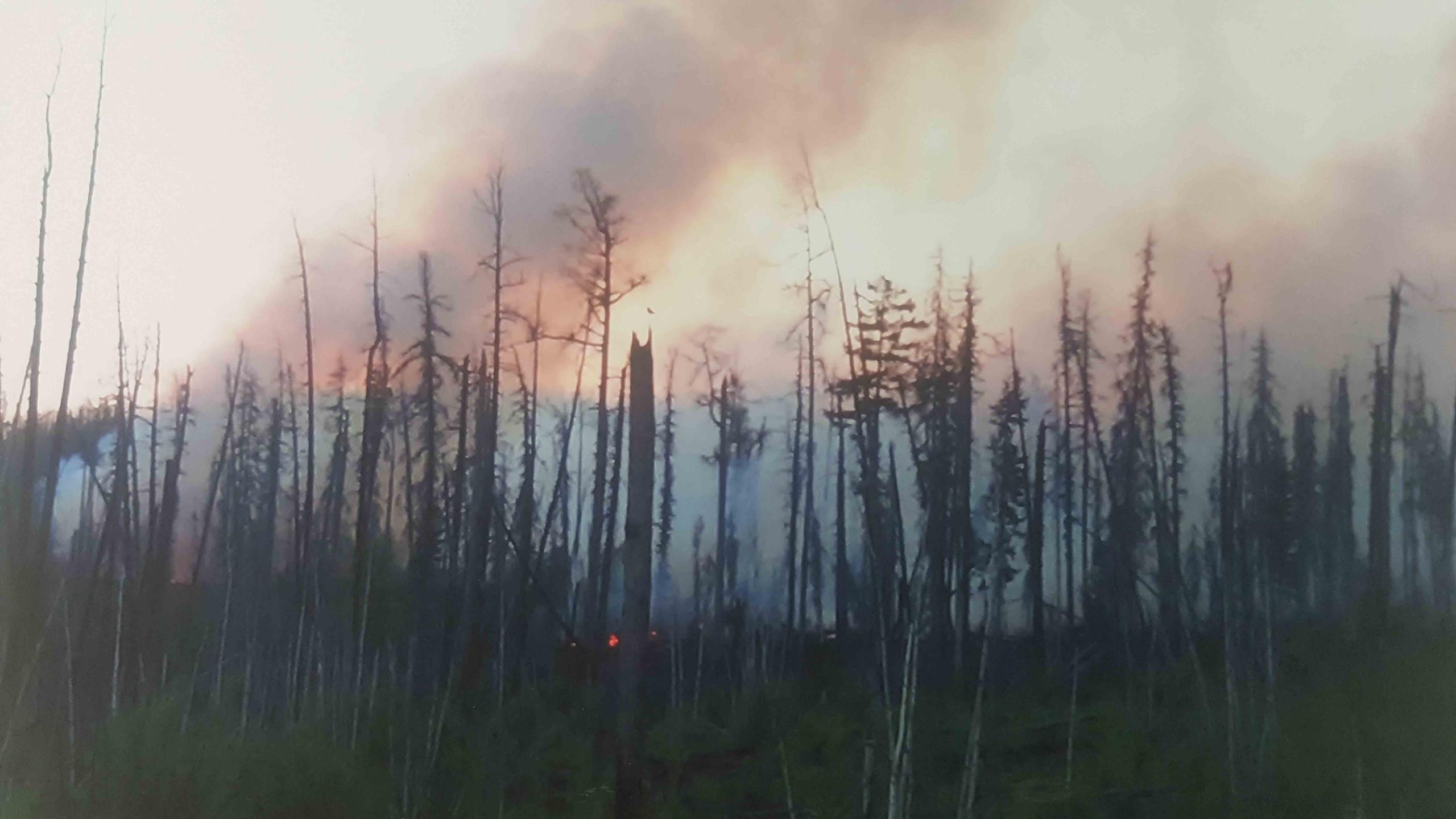 Дергачев Владислав 5 лет Лесной пожар