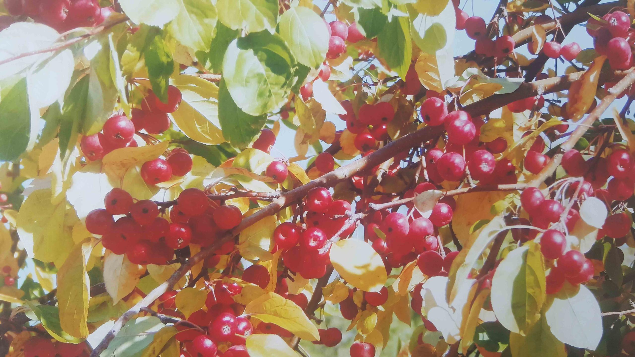 Захаров Валера 11 лет очаровнные яблочки