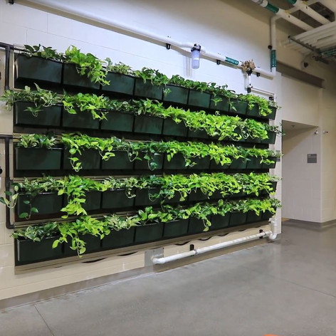 An indoor green wall helps students learn to cultivate plants that are later used in the school's food services