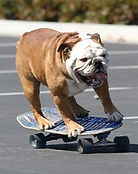Cão Skill 1.jpg