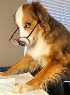 Cão Skill 2.jpg