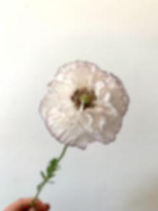 poppy - shirley 2.jpg
