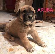 ARU1.jpg