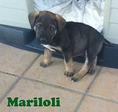 MARILO88 (2).jpg