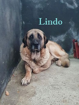 LINDO (2).jpg
