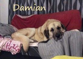 damian (2).jpg