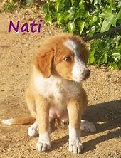 NATI (2).jpg