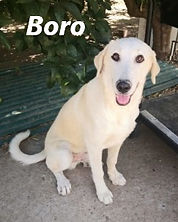 BORO (2).jpg
