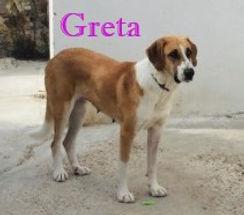 GRETA (2).jpg