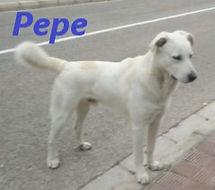 PEPE (2).jpg