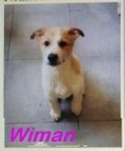 WYMAN (2)_InPixio.jpg
