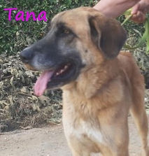 TANA1 (3).jpg