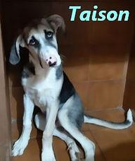 TAISON (2).jpg