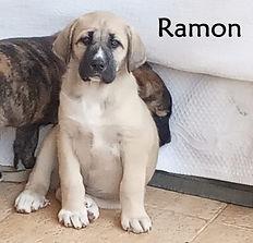 RAMON 2 (2).jpg