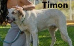 TIMON (2).jpg