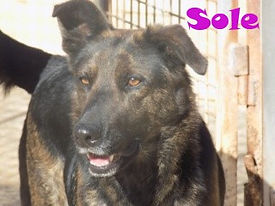 SOLE 2.jpg