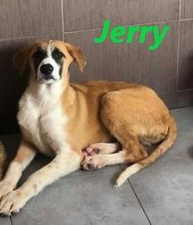 JERRY (3).jpg