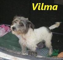 VILMA1 (2).jpg
