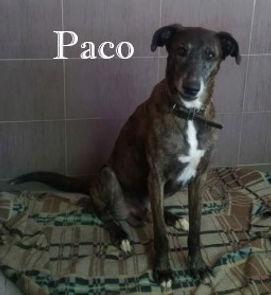 PACO (2).jpg