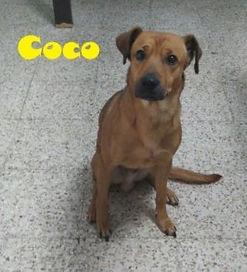 COCO (2).jpg