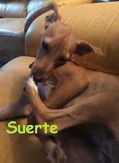 SUERTE (2).jpg