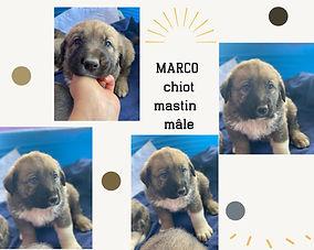 BB MARCO.jpg