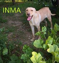 INMA1 (3).jpg