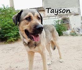 TAYSON (2).jpg