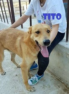 TITO 1 (2).jpg