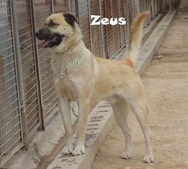 Z2 (2).jpg