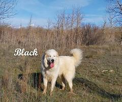 BLACK 2 (3).jpg