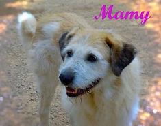 MAMY (2).jpg