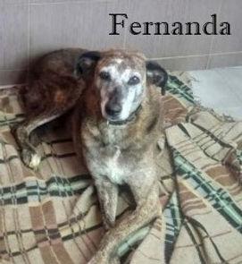 FERNANDA (3).jpg
