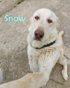 SNOW 1 (3).jpg