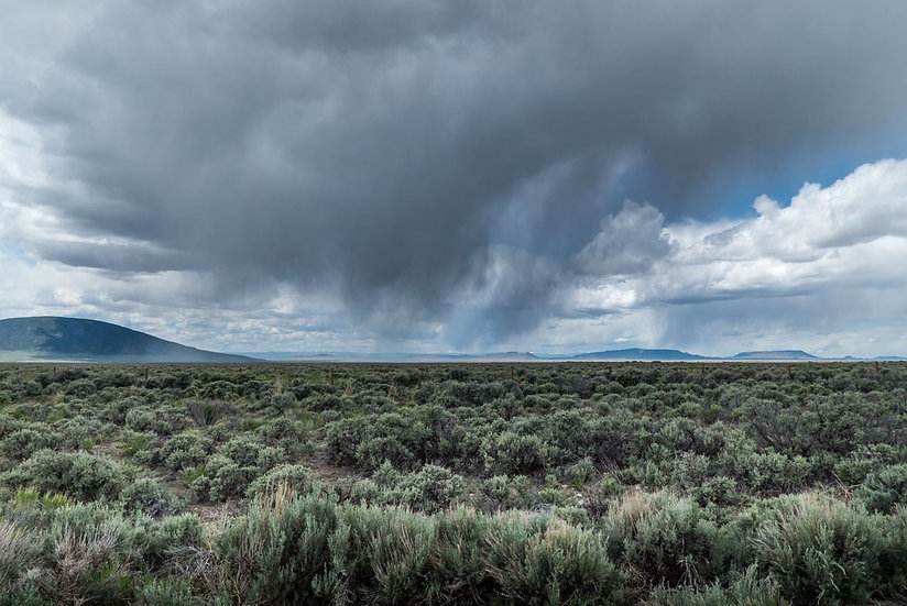 Sage Fields, NM