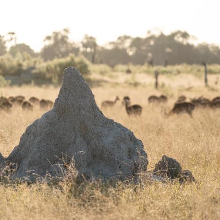 How Termites Built the Delta