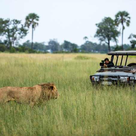 Discover Botswana: In Conversation With Brad Bestelink