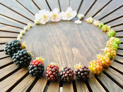At leve cyklisk - fra knop til frugt