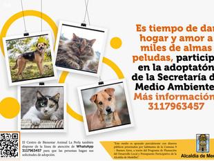 Un nuevo comienzo, una nueva oportunidad para las familias y los animales en la gran adoptatón