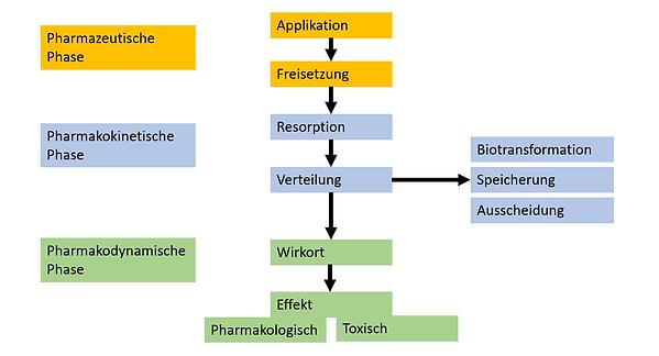 Überblick_Pharmakologie.PNG