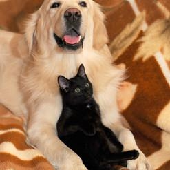 dog-and-cat-2908810_1920.jpg