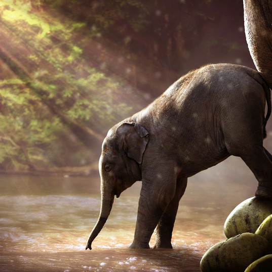 elephant-2380009_1920.jpg